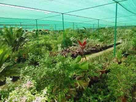Green View Nursery Gunjur Gardening Services In Bangalore