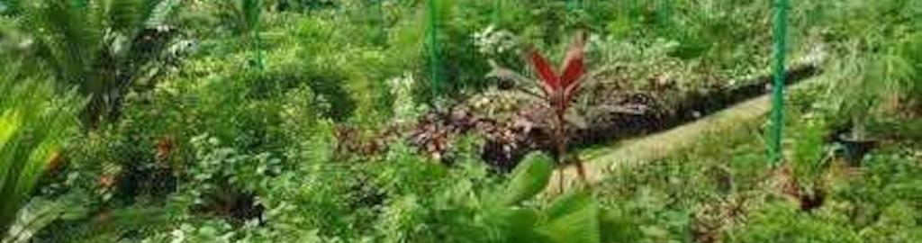 Green View Nursery Photos Gunjur Bangalore Pictures