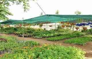 Surabhi Nursery Garden Landscapes & Surabhi Nursery Garden Landscapes Vijayamangalam - Surbhi Nursery ...
