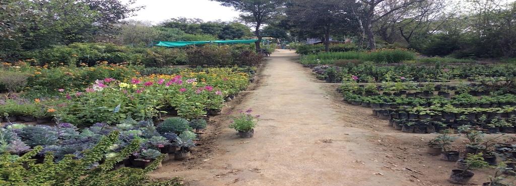 Sekhon Hi Tech Plants World Nursery
