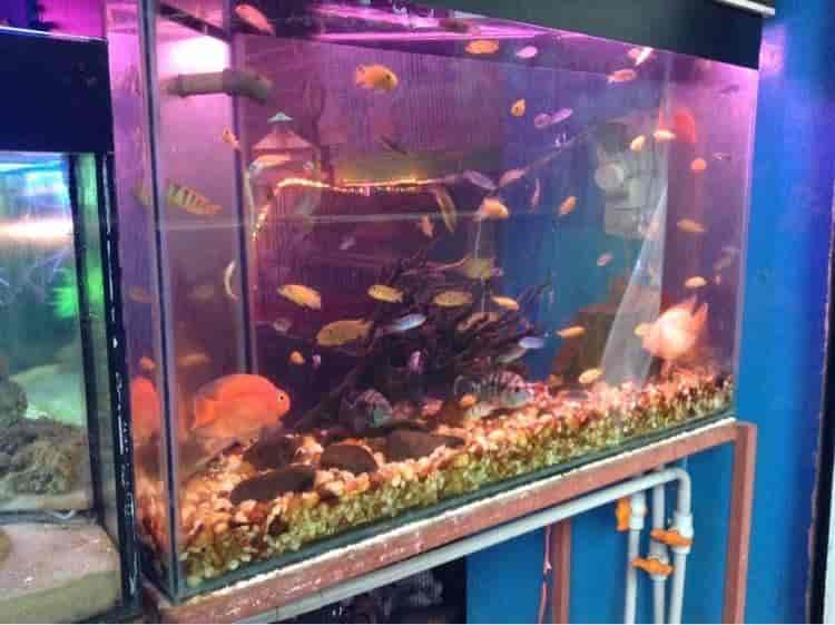 Royal Aquarium Pet Shop Bejai Mangalore Pet Shops Justdial