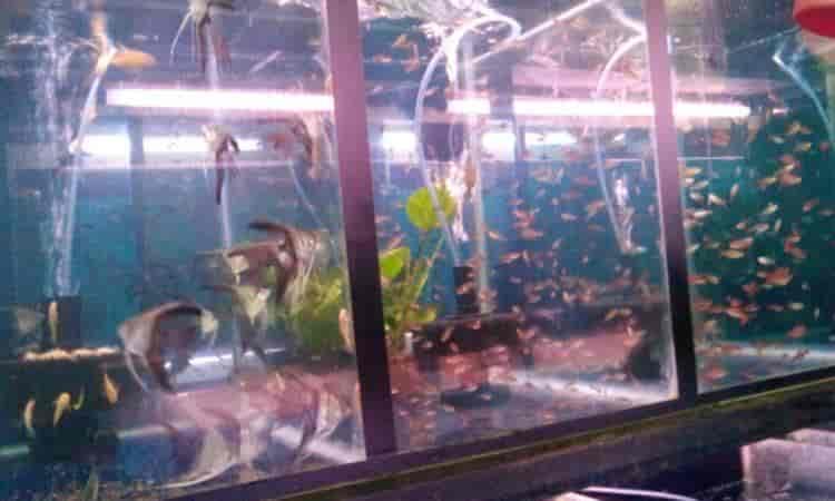 Aque King Kurla East Plant Nurseries In Mumbai Justdial