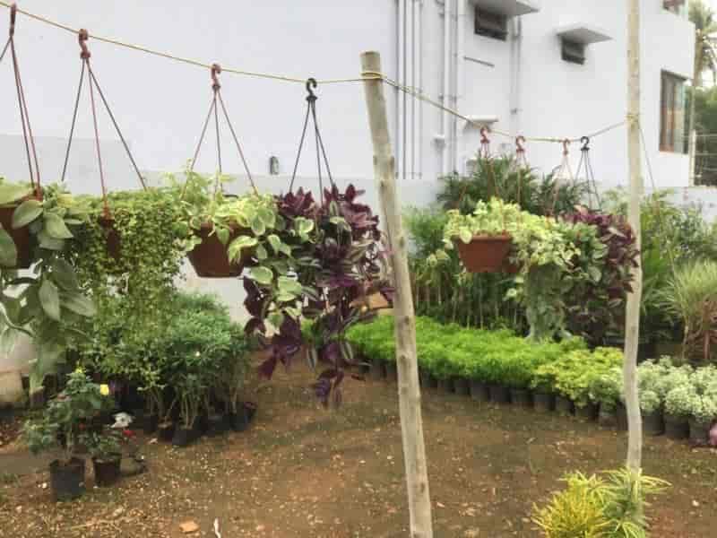 Sachit Farm Nursery Photos Bogadi Mysore Pictures Images