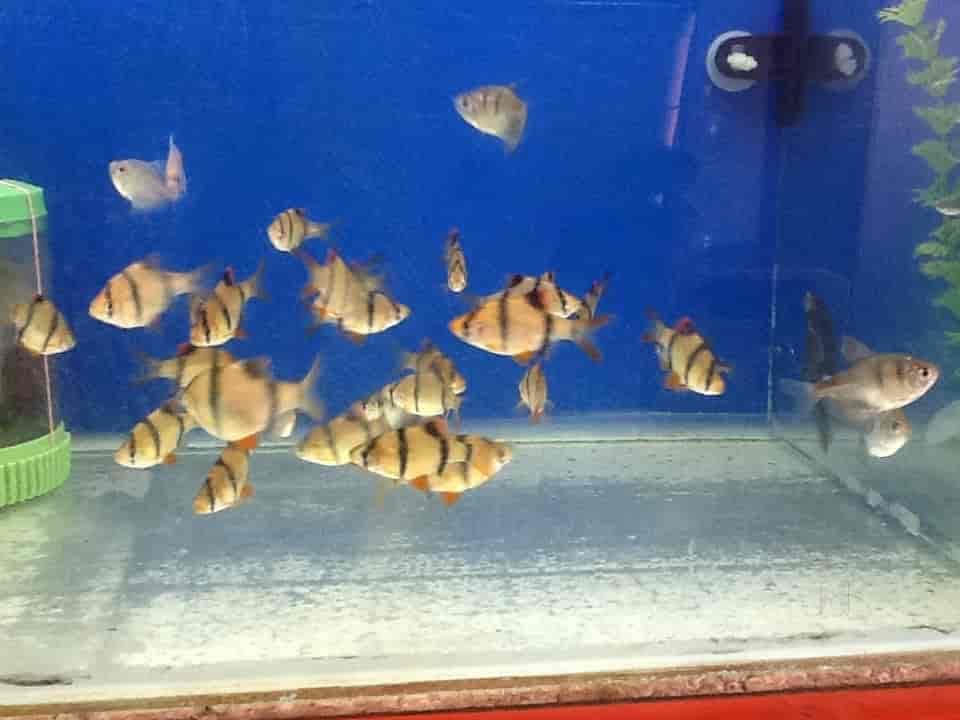 rainbow aquarium photos mandi mohalla mysore pictures images