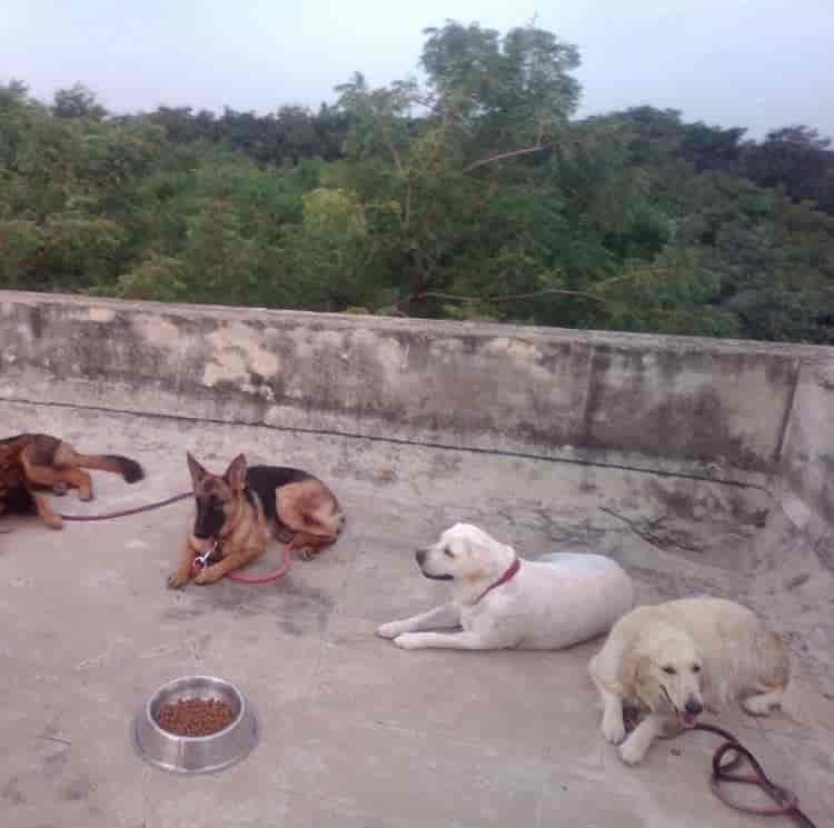 Top 10 Dog Trainers in Rajahmundry HO - Best Dog Training