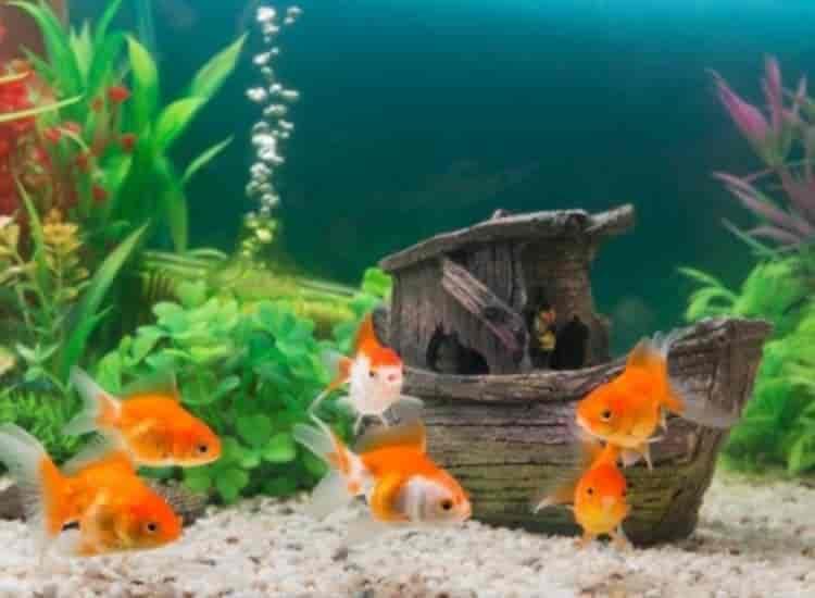 Malas Aquarium Fish Farms Breeder Wholesalers Reviews Kolathur