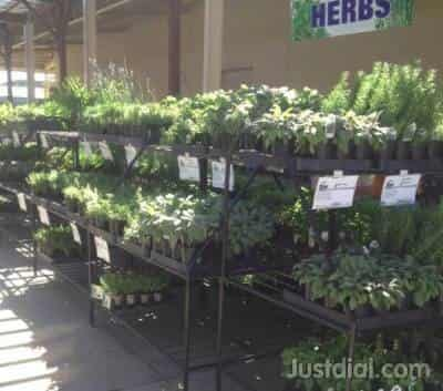 Star Nursery Inc 2600 W Ann Rd North Las Vegas Nv 89031 1of10